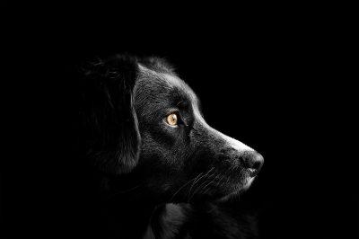 dog-4118585_1920